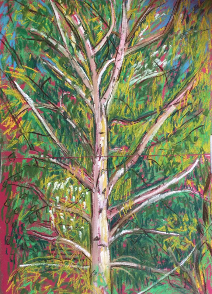 Birch Tree, No.20